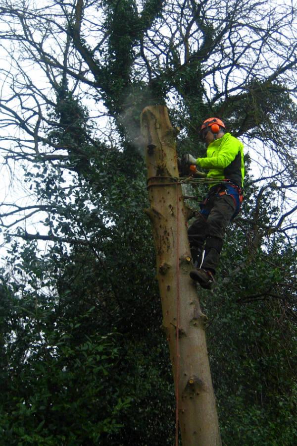 Tree surgery Bangor